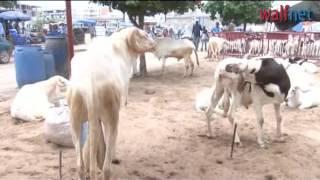 Tabaski, le mouton ne bêle pas
