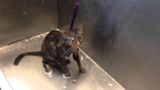 """getlinkyoutube.com-Cat says """"no more"""" during her bath!"""