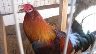 getlinkyoutube.com-RC Farm California USA