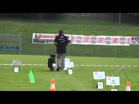 Bruno e Shira   Borgosatollo promesse rally obedience 2014