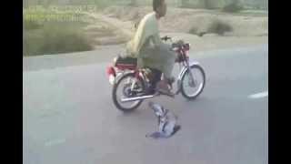 Amazing Talent Only in Pakistan Ustad (Riaz khan)