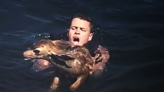getlinkyoutube.com-Baby Deer Found Miles Off-Shore Swimming for Life
