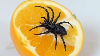 getlinkyoutube.com-SPIDER IN ORANGE!