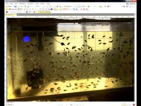 (2/2/2017) Tilapia Hatch - Final Count