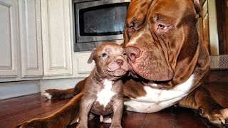 """getlinkyoutube.com-Taking It Back Guns and Pitbulls """"Theres A First Time For Everything"""""""