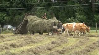 getlinkyoutube.com-Loading loose hay with oxen