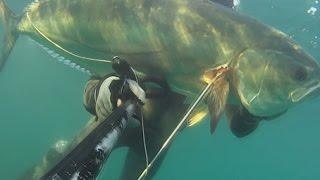pesca submarina al acecho en poca agua 5, Palometon!!