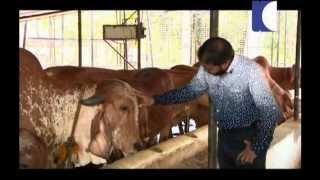getlinkyoutube.com-Mahalekshmi Gosala - (Kaumudy-Haritha Sundaram)