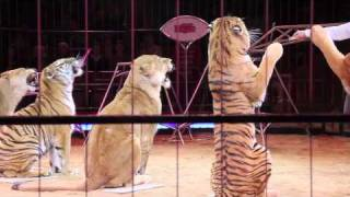 getlinkyoutube.com-Circus Krone 2011: Premiere 2. Winterspielzeit München 01.02.2011