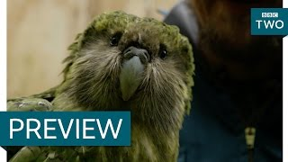 Sirocco the flightless parrot and his human brother - New Zealand: Earth's Mythical Islands