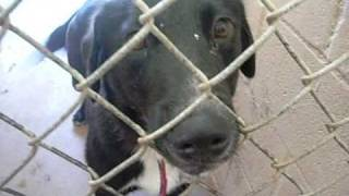 Rescue the Animals . Org  -  SPCA - Abilene
