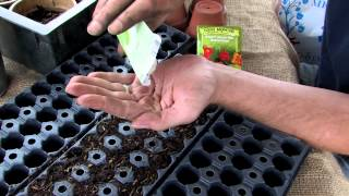 Planting Seeds With Seed Starting Blends