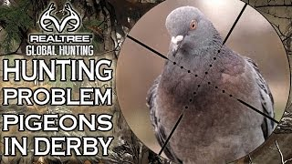 Pigeon Shooting: Hunting woodpigeons over decoys