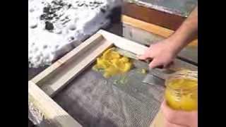 getlinkyoutube.com-Hranire cu miere cristalizata pe podisor