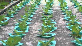 hydroponics ไฮโดรโปนิกส์ Rocket Cos