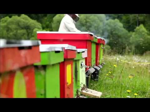 Beekeeping University Online Course