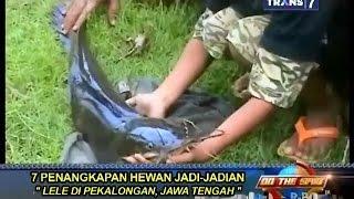 getlinkyoutube.com-On The Spot - 7 Penangkapan Hewan Jadi-Jadian