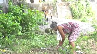 getlinkyoutube.com-Goat project 2012 Philippines