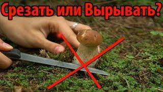 getlinkyoutube.com-ГРИБЫ: Срезать или рвать? - Научный подход