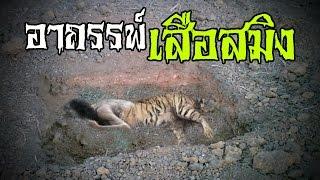 getlinkyoutube.com-อาถรรพ์เสือสมิง