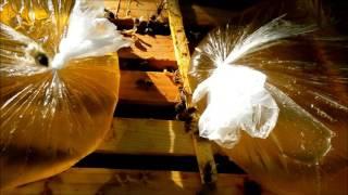 getlinkyoutube.com-Пчеловодство Препарат КАС-81 Beekeeping preparation CAS-81