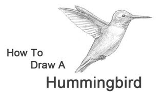 how to draw a hummingbird step by step youtube