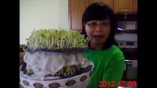 getlinkyoutube.com-เพาะถั่วงอกง่ายๆ - รดน้ำวันละครั้งเดียว (How to grow bean sprouts - watering once a day only)