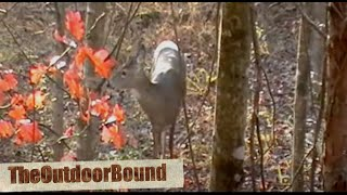 Meat Hunter: Whitetail Deer vs 12 Gauge Slug