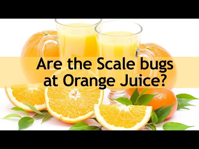 Kashrut Alert - Are the Scale bugs at Orange Juice