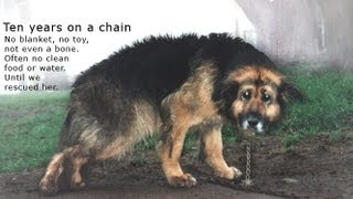 flushyoutube.com-10 Years Chained: A Dog's Rescue Story. She was snowed and sleeted on - covered in mud - no comforts