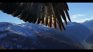 getlinkyoutube.com-Phantom 3  get kidnapped by two eagles
