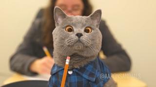 Aaron's Animals NEW VIDEO COMPILATION 2017    FunnyVines
