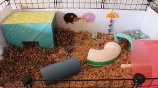 getlinkyoutube.com-Revamped Hedgehog Cage & Piggy Updates
