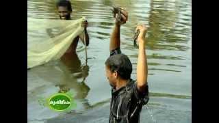getlinkyoutube.com-cultivation of pearl fish