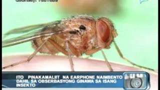 Pinakamaliit na 'earphone' naimbento dahil sa obserbasyong ginawa sa isang insekto