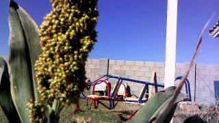getlinkyoutube.com-Gift of the sorghum plant