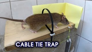 getlinkyoutube.com-Cable Tie Rat/Mouse Trap