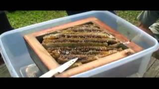 getlinkyoutube.com-пчелы японии как вариант