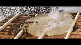 подкормка пчел ( часть 1 )