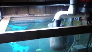 getlinkyoutube.com-Coralife 125g super skimmer - NEED HELP