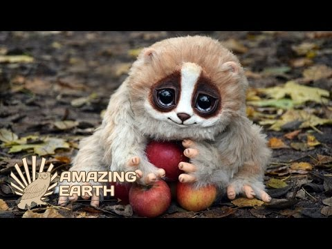 10 CUTE & Funny Animals That Could Kill You! | Amazing Earth
