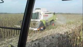 getlinkyoutube.com-- Napraforgó aratás 2011/Sunflower Harvest 2011 - 3x Claas + MF 8480, 8280 + Fliegl Gigant - {HD}