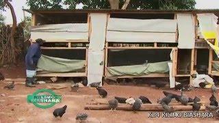 getlinkyoutube.com-Kienyeji Chicken Business: Kilimo Biashara Kenya