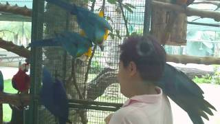 Bird Farm @ Chachergsao, Central Thailand 02.MP4
