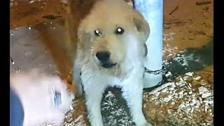 getlinkyoutube.com-كلب هاجم وعض صاحبه فقرر الاستغناء عنه مع جمال العمواسي