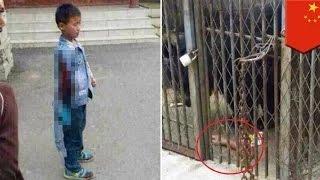 getlinkyoutube.com-طفل صيني يحاول إطعام دب في حديقة الحيوان ليعض الأخير يده