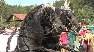 Concurs de frumusete pentru cai - Festival ecvestru Rasnov - 2013
