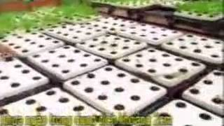 getlinkyoutube.com-Kỹ thuật trồng rau sạch an toàn bằng phương pháp thủy canh www.thuycanhgwall.com
