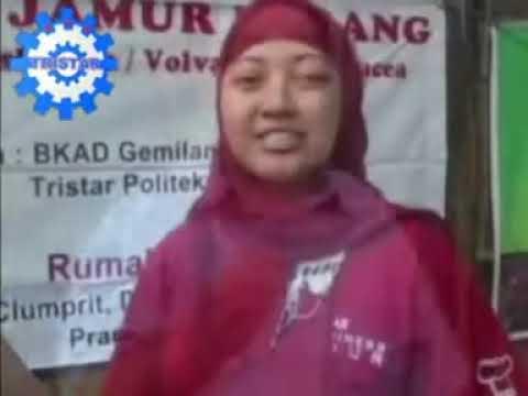 Peluang Bisnis Pertanian: Budidaya Jamur Merang. Cara Membuat Kumbung. Info:085733691548.