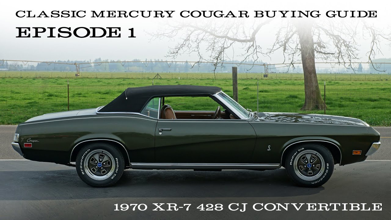 Cougar Buying Guide